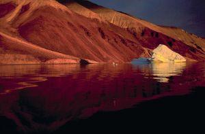 WWF Àrtic 2005